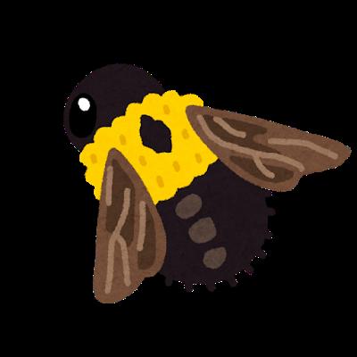 bug_kumabachi.png