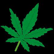 drug_taima_ha.png